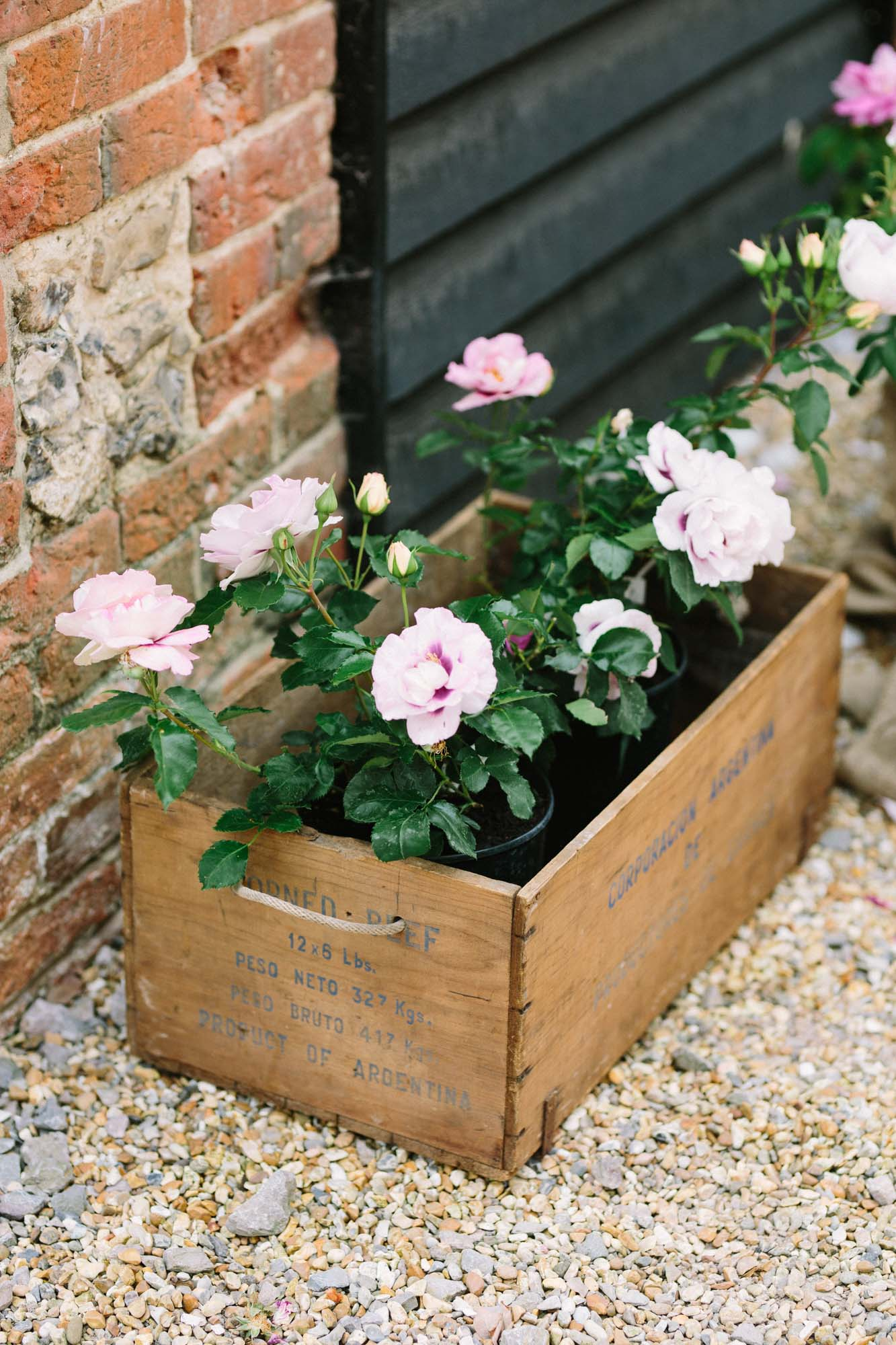 Pink roses planted in wooden champagne crate at Sussex Garden Wedding
