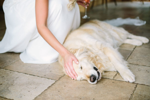 Bride stroking head of her pet golden retriever
