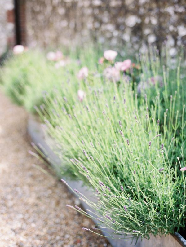 Lavender planted in trough for Sussex Garden Wedding