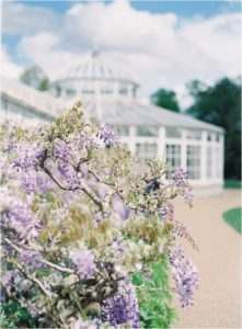 Wisteria blooming outside The Orangery at Chiswick House