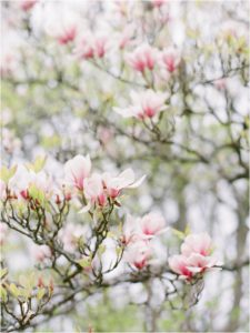 Magnolia flowers captured by Camilla Arnhold Photography